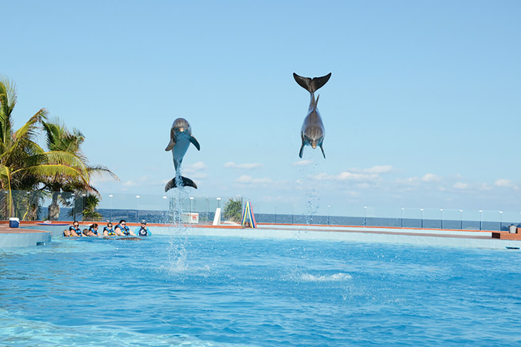 Swim With Dolphins In Tulum Akumal Dolphin Discovery