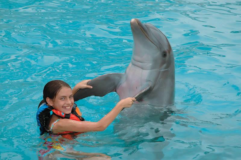 Dolphin experience