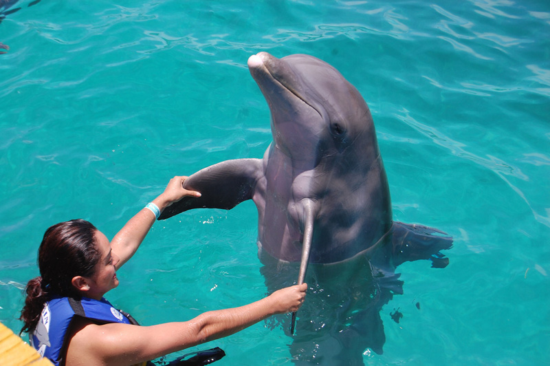 swimming with dolphins in cancun isla mujeres dolphin discovery - Dolphin Pics