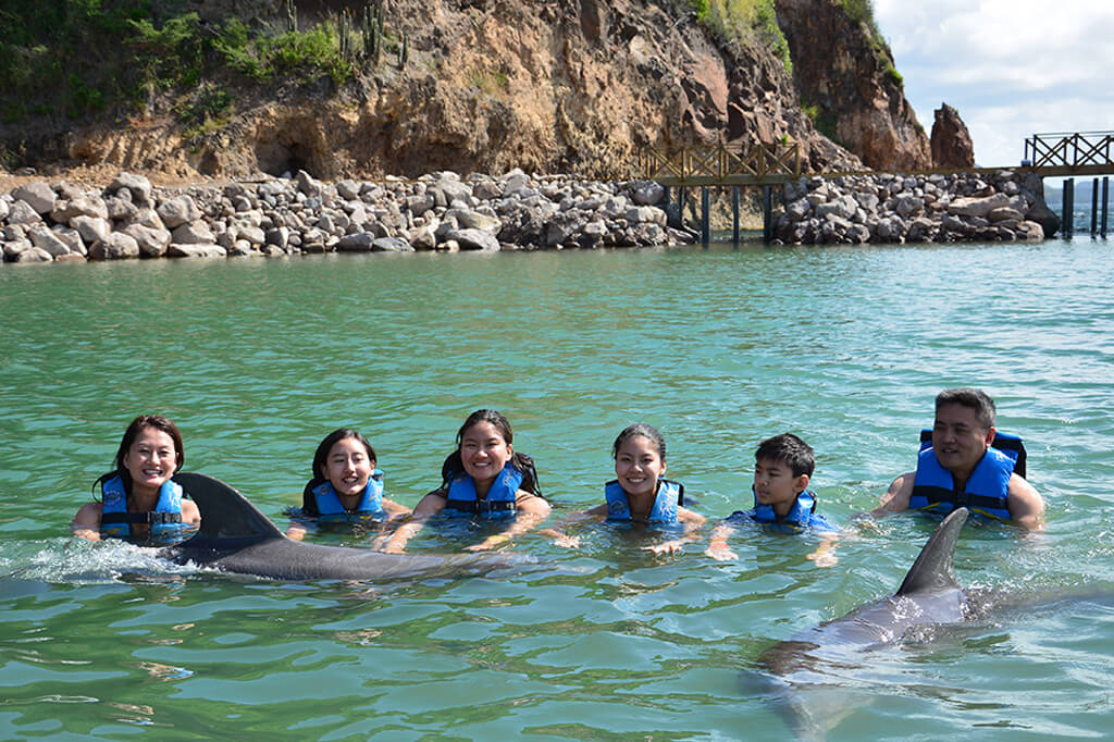 swim with dolphins in saint kitts with dolphin discovery