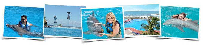 Actividades Dolphin Playa del Carmen