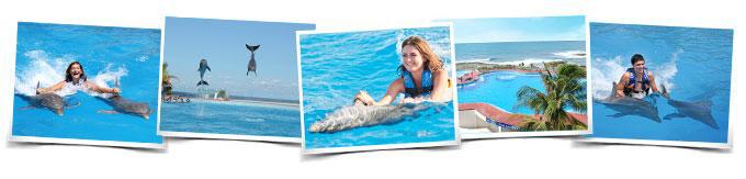 Nadar con delfines  Dolphin Playa del Carmen