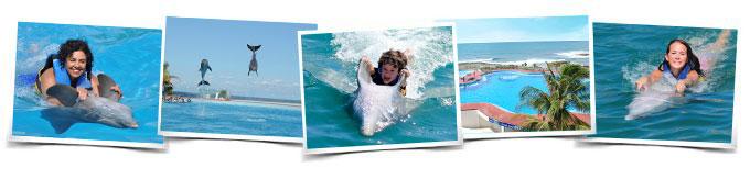 Activities adventure swim with dolphins