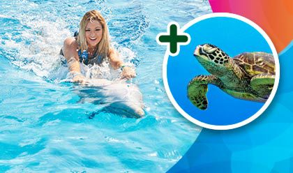 Dolphin Swim Adventure + Snorkel with Turtles