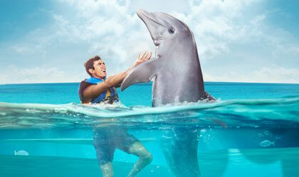Dolphin Lovers´ Swim
