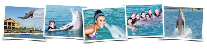 Swimming with dolphins in Grand Cayman