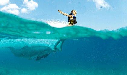 Dolphin Royal Swim VIP