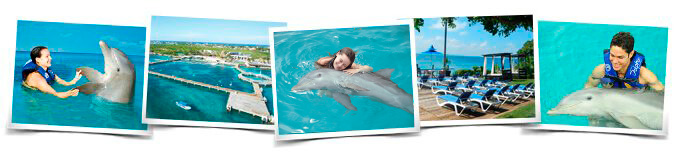 Swimming with Dolphin Interactive Program