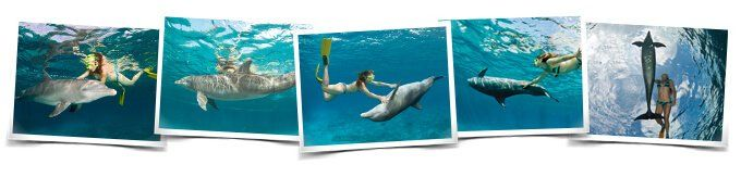 Behaviors Dive with dolphins