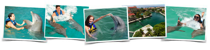Dolphin Royal Swim Dreams Puerto Aventuras