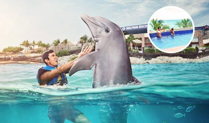 Dolphin Royal Swim VIP