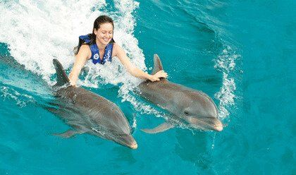 swim with dolphins in los cabos cabo san lucas dolphin discovery