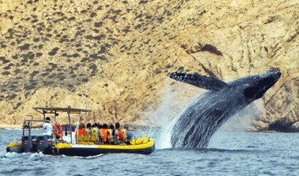 Whale Watching San Lucas
