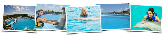 Caribbean island activities swim with dolphins
