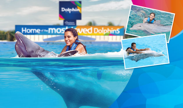 Dolphin Swim Adventure Memories Package