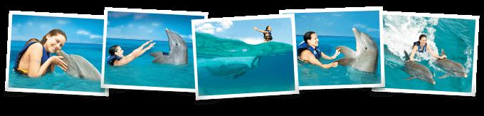 Dolphin Royal Swim Isla Mujeres
