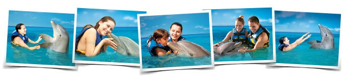 Swimming with dolphins interactive programs