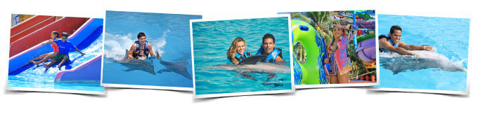 Dolphin Royal Swim Vallarta