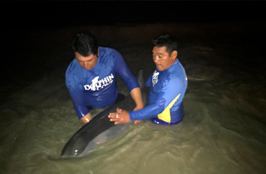 THE DOLPHIN COMPANY AND ITS TALENTED TEAM OF VETERINARIANS RESCUE MARINE LIFE.