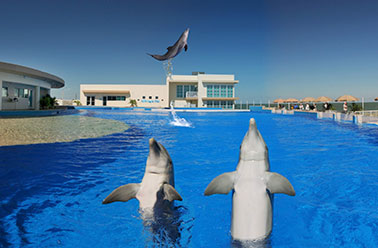 MARINELAND FLORIDA, VENUE OF THE FILM 'BERNIE THE DOLPHIN 2'