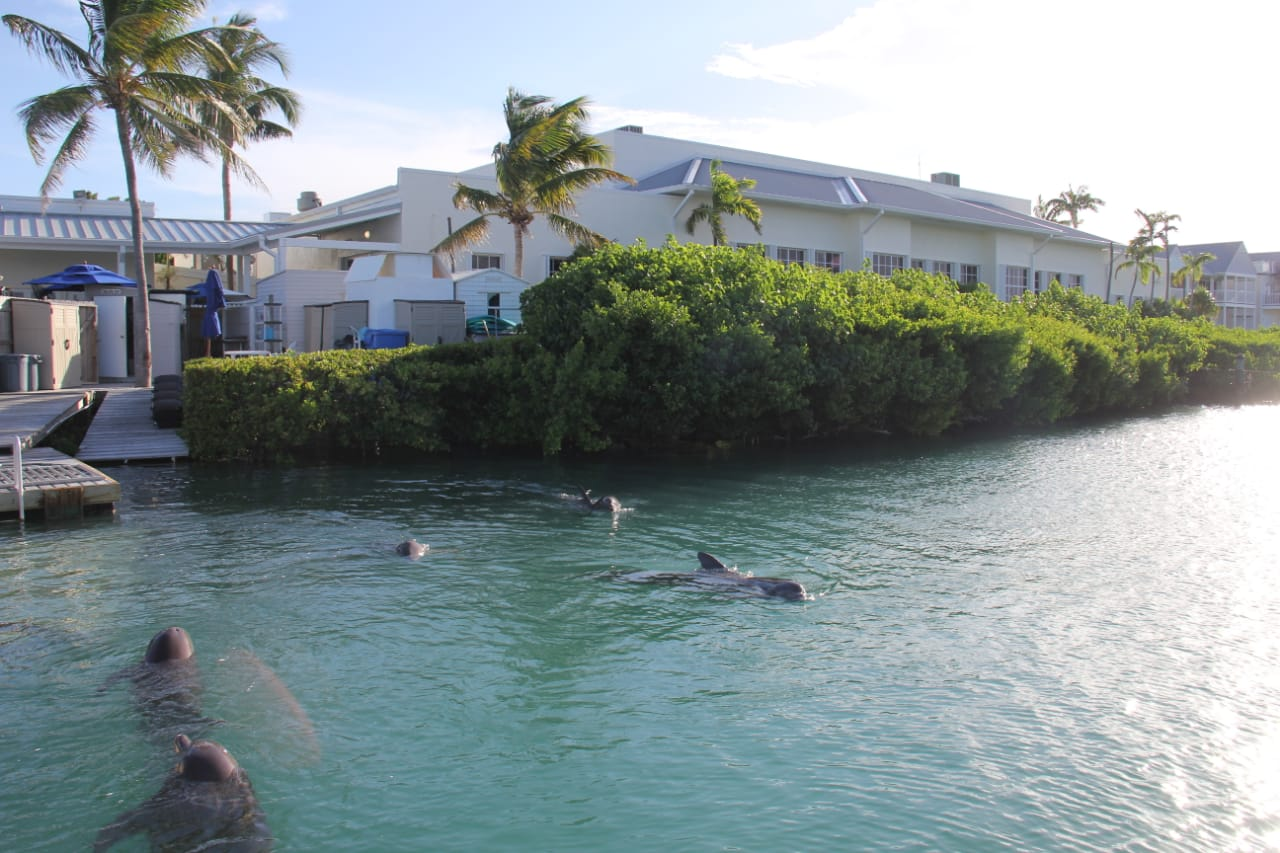 DOLPHIN DISCOVERY ACQUIRES DOLPHIN CONNECTION PARK IN FLORIDA