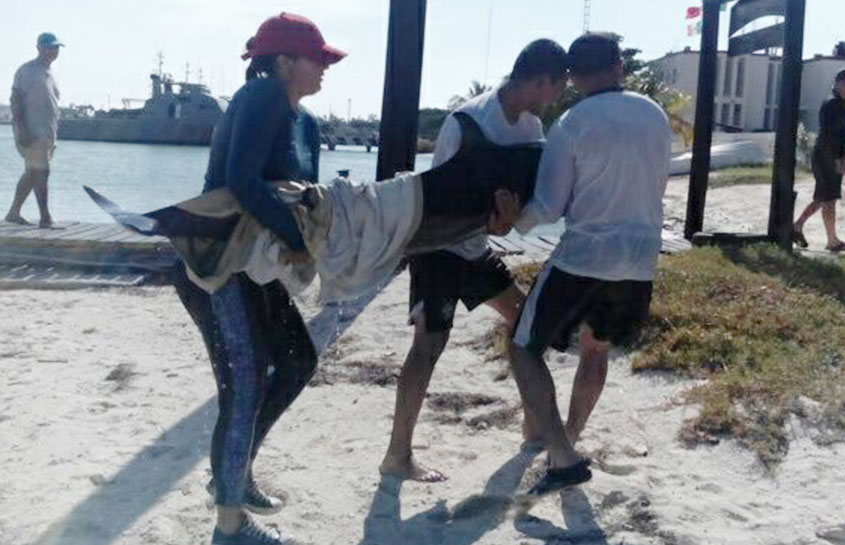 RESCUE OF A STRANDED DOLPHIN IN THE YUCATAN BEACHES