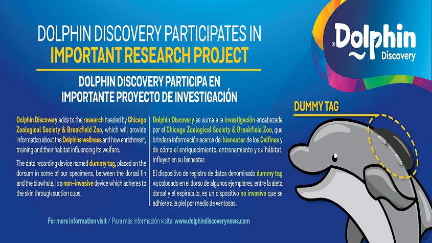 DOLPHIN DISCOVERY PARTICIPATES IN AN INTERNATIONAL PROJECT FOR THE CETACEANS' WELFARE