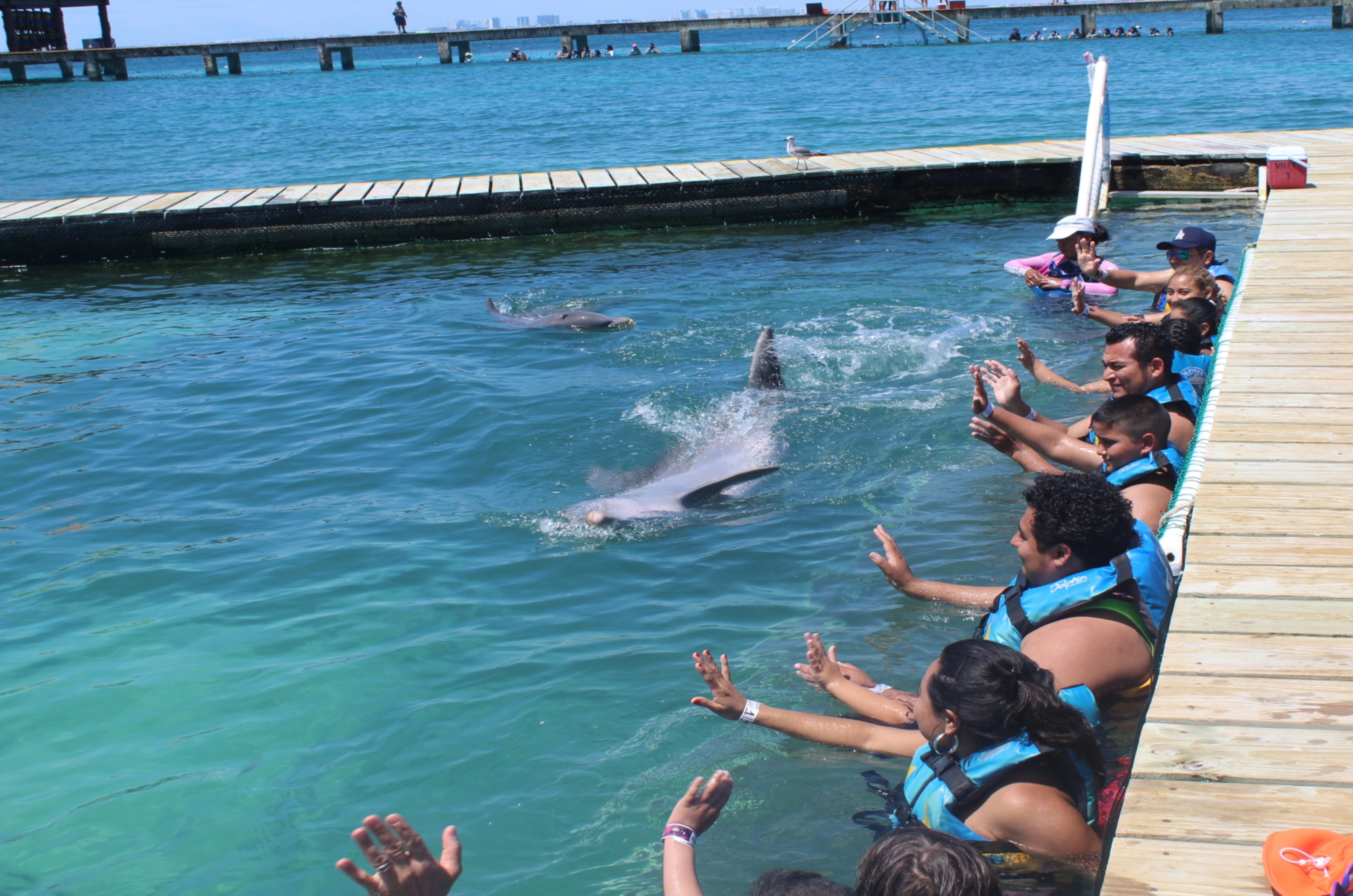 FUNDACIÓN DOLPHIN DISCOVERY SIGNED AN AGREEMENT WITH BENEFITED ASSOCIATIONS