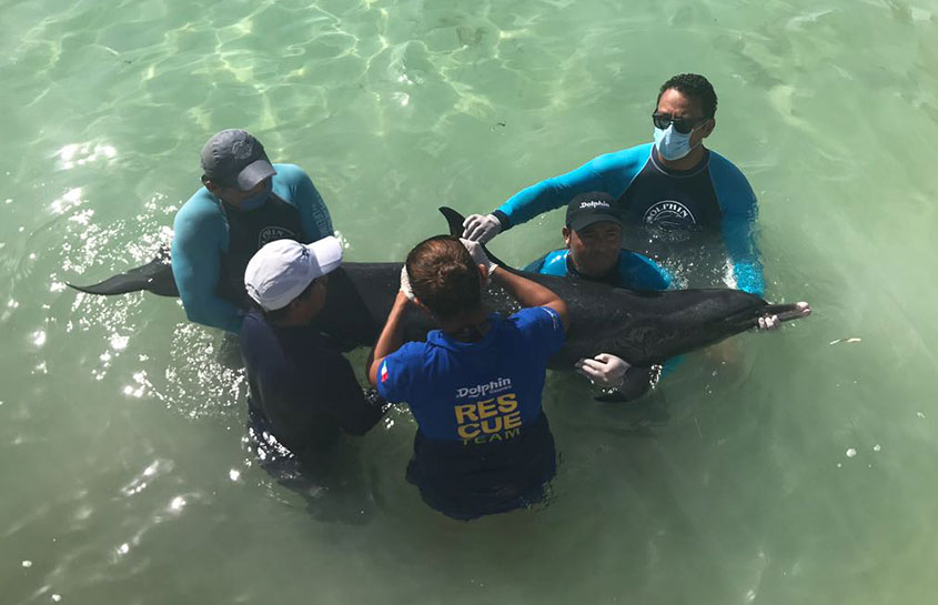 RESCUE OF A STRANDED DOLPHIN IN THE YUCATAN