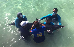 RESCUE OF A STRANDED DOLPHIN IN YUCATAN