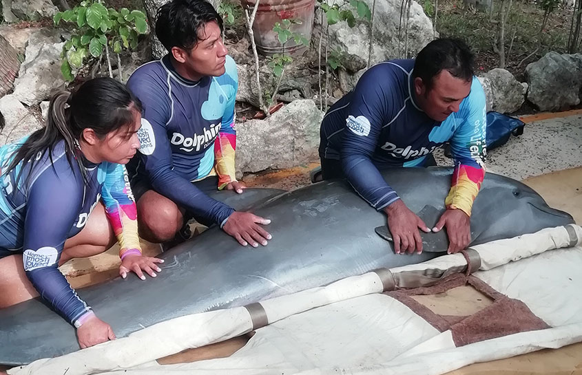 DOLPHIN GROUP CARRIED OUT FOR THE FIRST TIME A TRAINING PROGRAM TO THE HOLBOX ISLAND VARAMENTS NETWORK