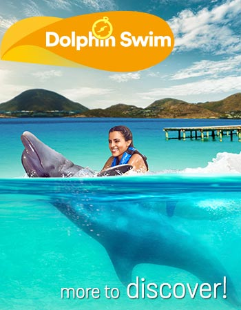 Dolphin Swim Program