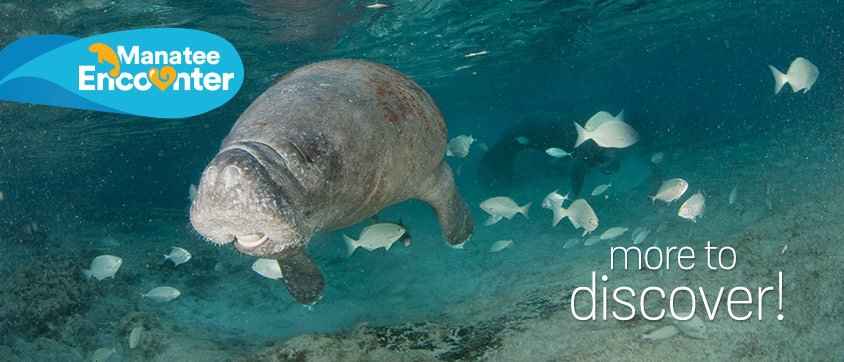 Manatee Encounter Program