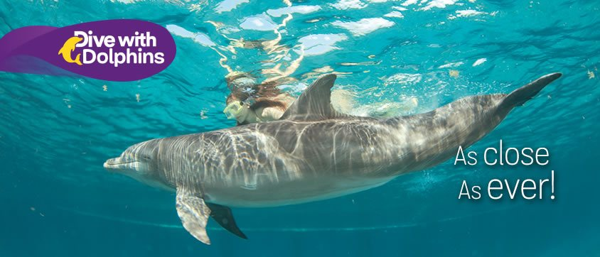 Dive with Dolphins Program