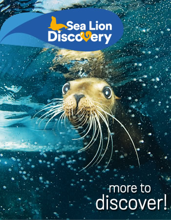 Sea Lion Discovery Program