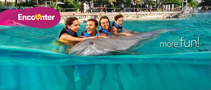 Dolphin Encounter Program