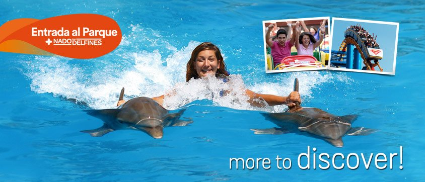 Swim With Dolphins Program