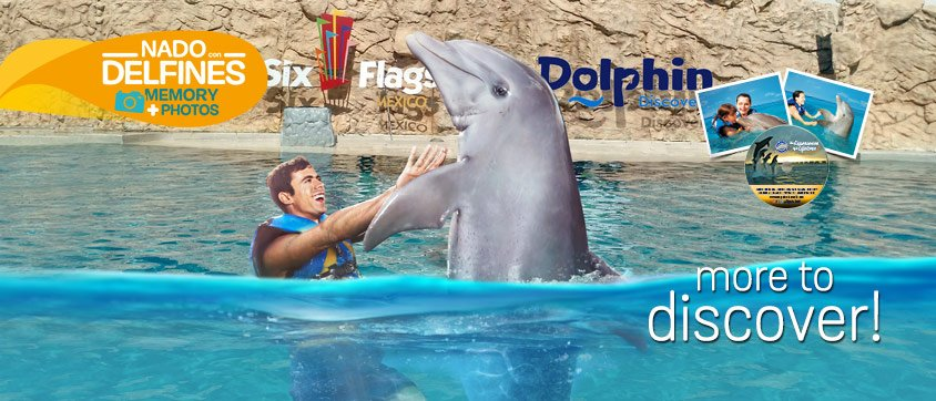 Dolphin Swim Adventure Memories Program