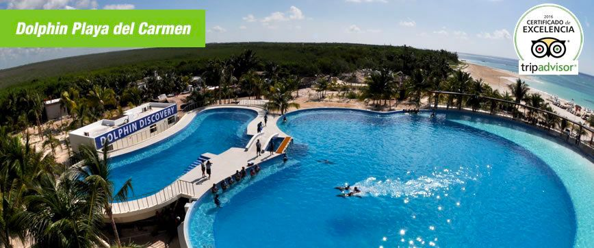 Swim with Dolphins in Playa del Carmen | Dolphin Discovery