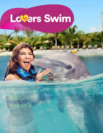 Dolphin Lovers Swim Program