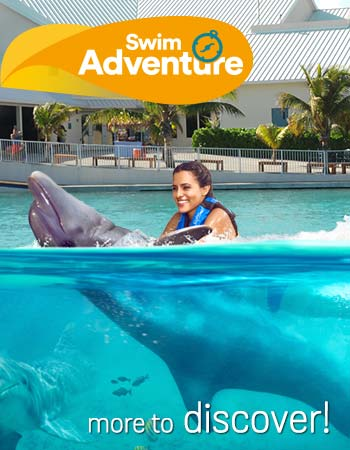 Dolphin Swim Adventure Program