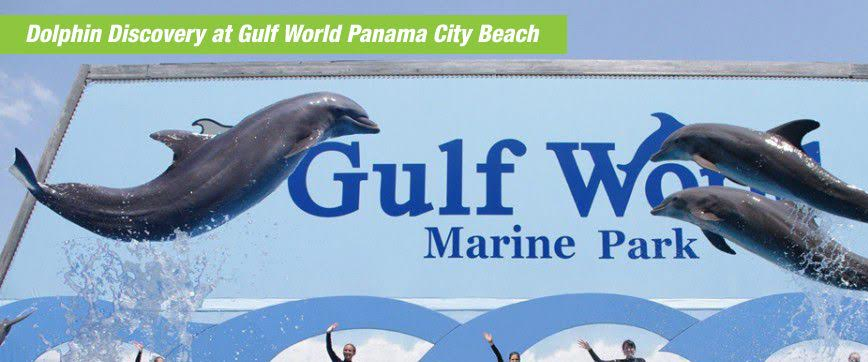 Gulf World By Dolphin Discovery