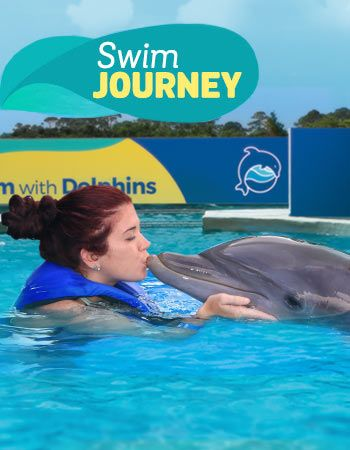 Dolphin Swim Journey