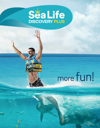 Sea Life Discovery Plus Program
