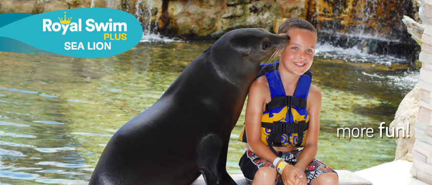 Dolphin Royal Swim Plus + Sea Lions