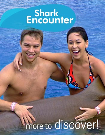 Shark Encounter Program