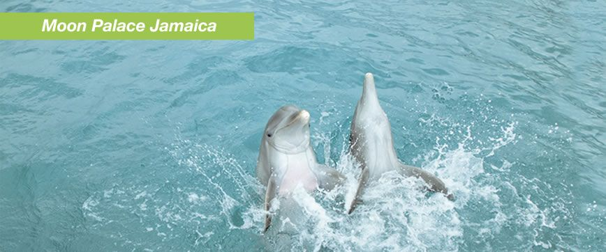 Swim with Dolphins in Moon Palace Jamaica  Dolphin Discovery