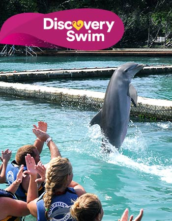 Dolphin Discovery Swim Program